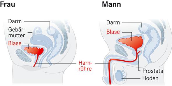 Schemazeichnung Blase bei Frau und Mann