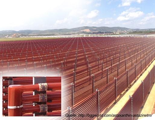 Astaxanthin Produktion Freilandfarm