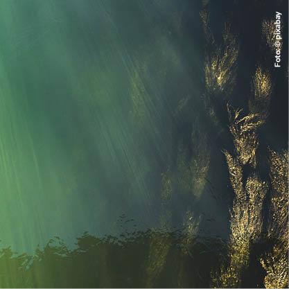 Astaxanthin und Algen